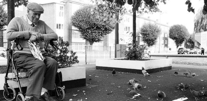 Carewatch News - Johns Pigeons